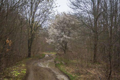 Гора Собер-Баш, кругосветка