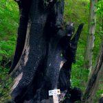 Дерево возмездия, Мамедово ущелье
