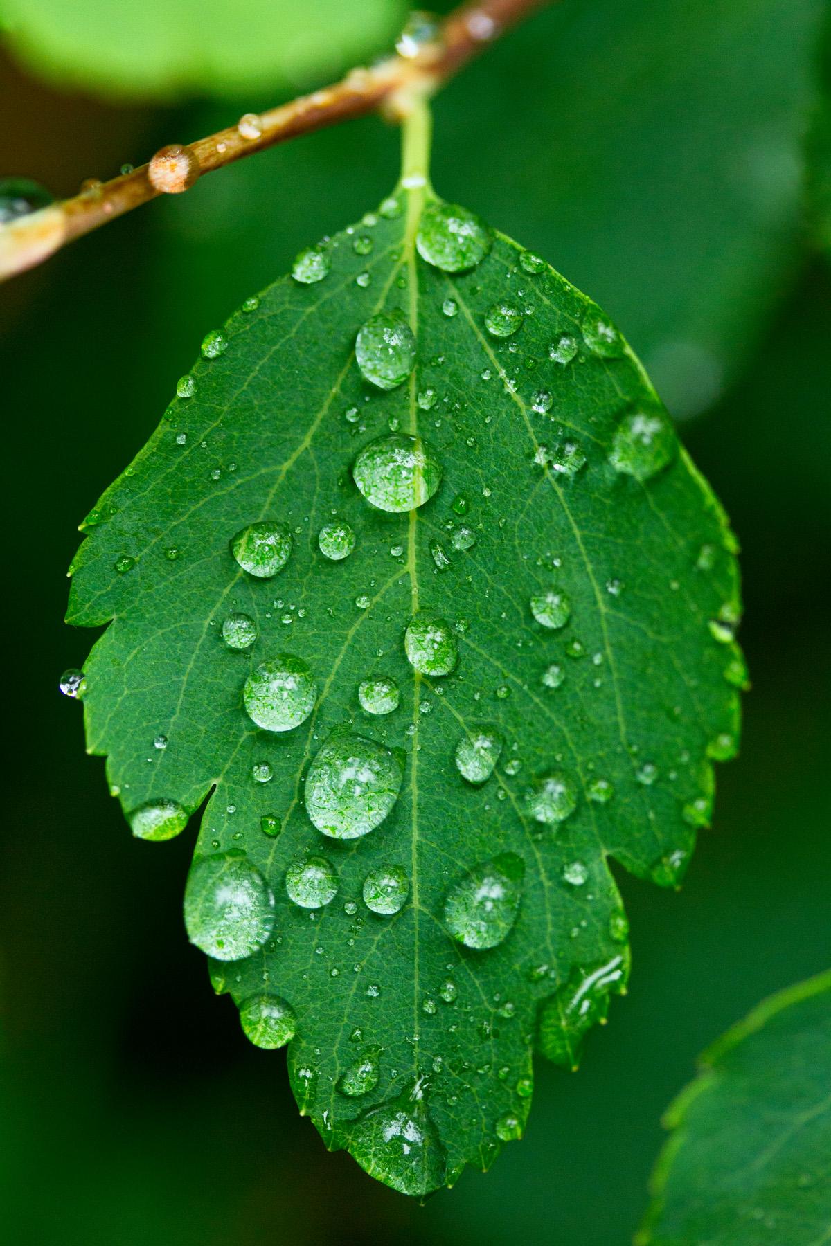 Тучи и дождь