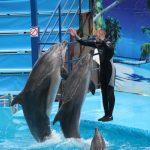 Фото из официальной группы дельфинария