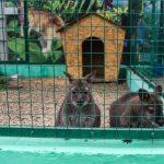 Мини-зоопарк Ейска