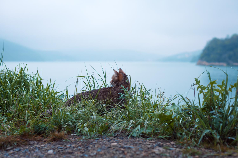 кошка на озере Абрау