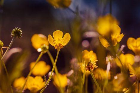 Цветы на полянке долины реки Жане