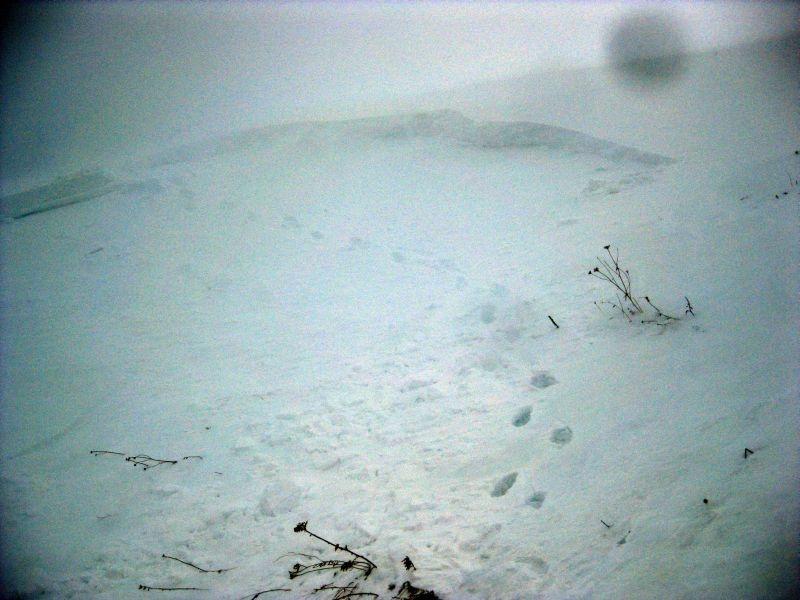 Фото лавины, сорванной на тропе между Армянским и Гузерипльским, январь 2013