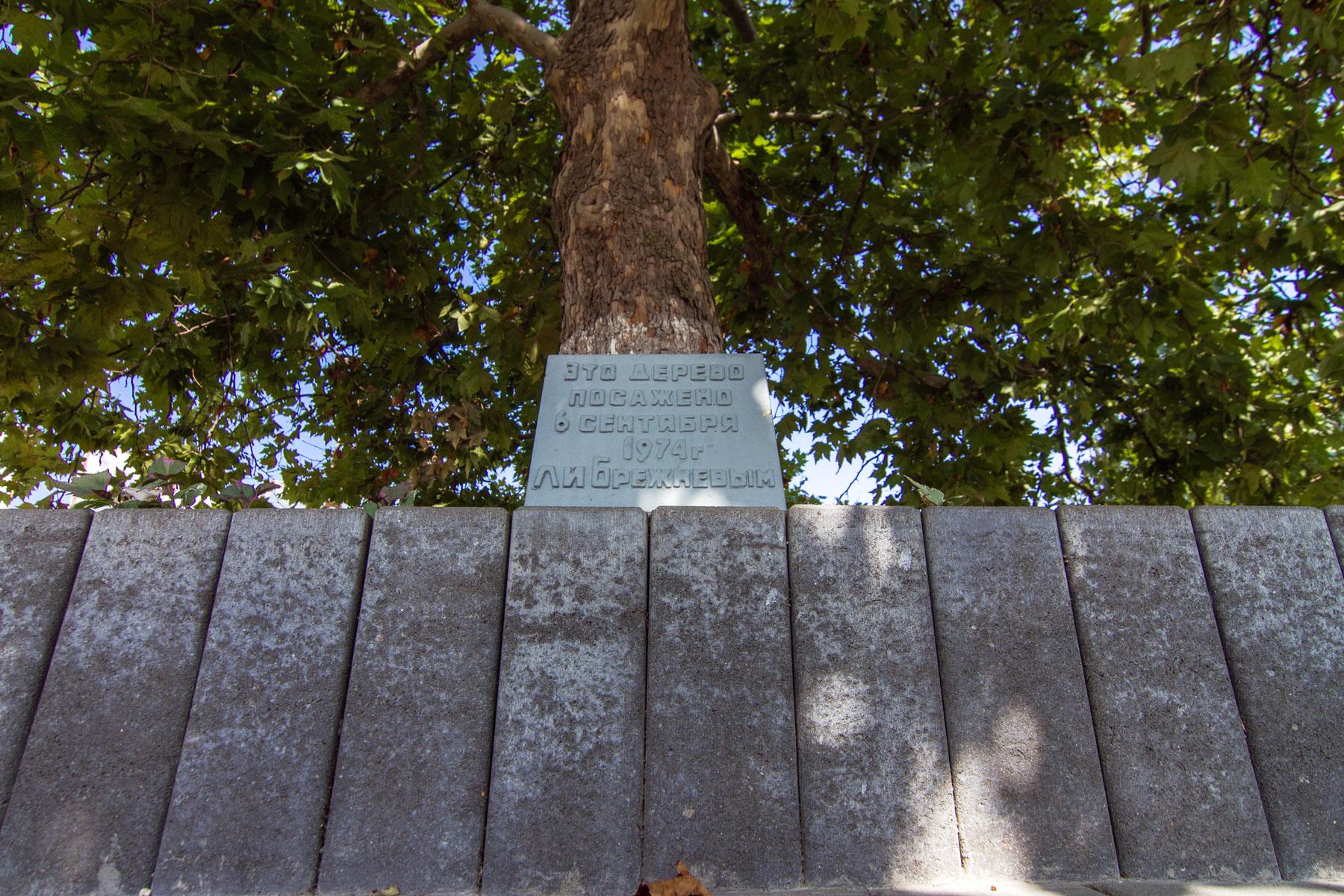 Платан, посаженный Л.Н. Брежневым, мемориальный комплекс «Долина смерти»