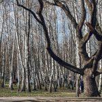 Солнечный остров, Краснодар