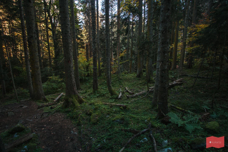 Тропа сквозь красивый лес на Бадукские озера, Домбай