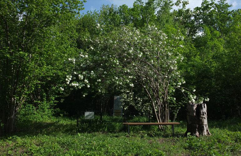 Ферма Сидра, Чибий, фото Сергея Шульга