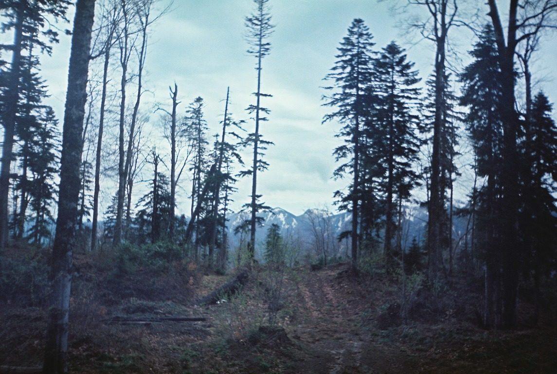 походы, горы ,краснодарский край, шесси