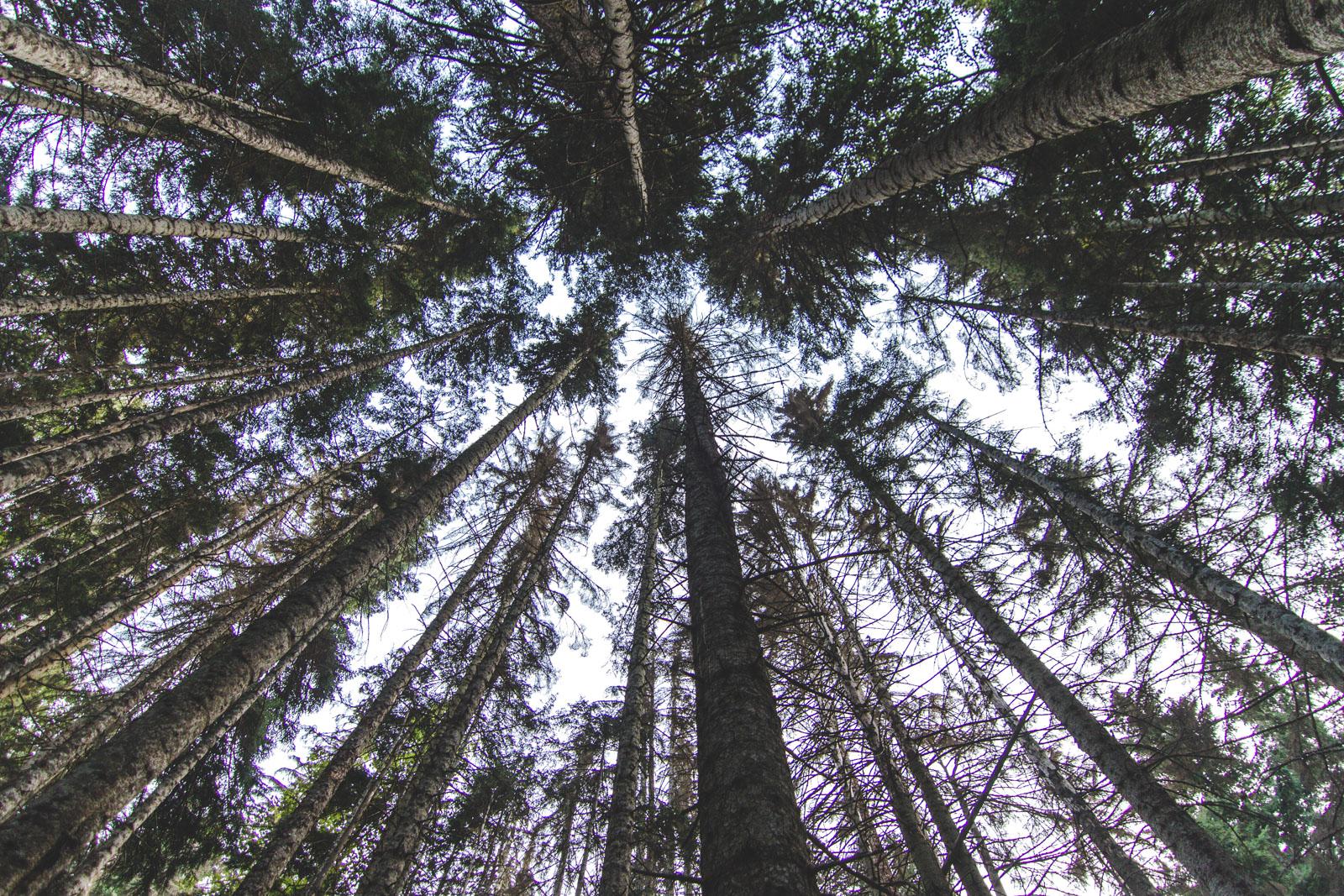 Лес у реки Уллу-Муруджу, Домбай