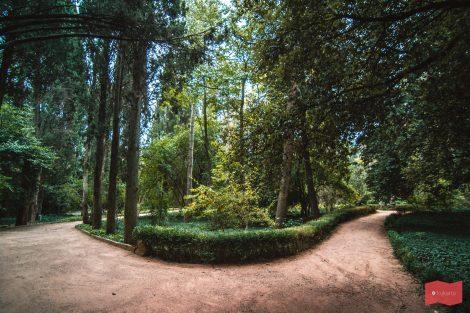 Никитский ботанический сад, Никита, Ялта