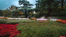 Никитинский ботанический сад, Крым