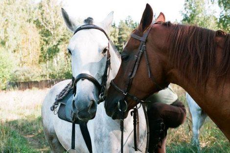 конная база синегорье