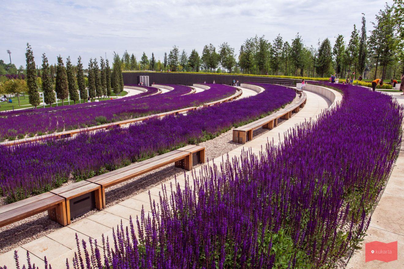 Цветение шалфея в парке Краснодар (парк Галицкого)
